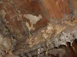 Sry rot skin on joists